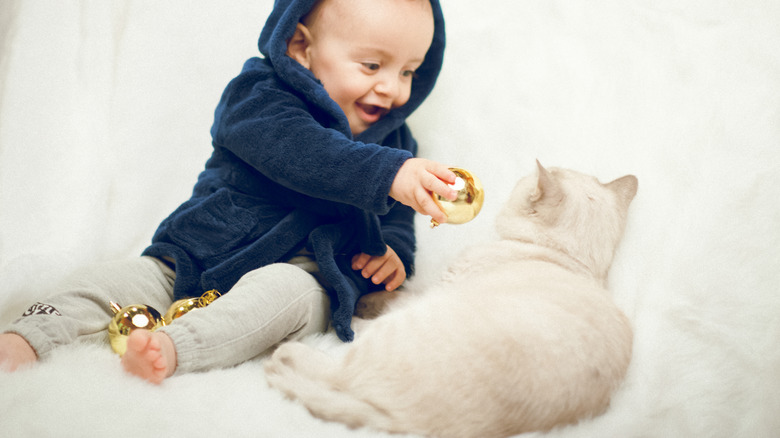 baby toddler with white cat