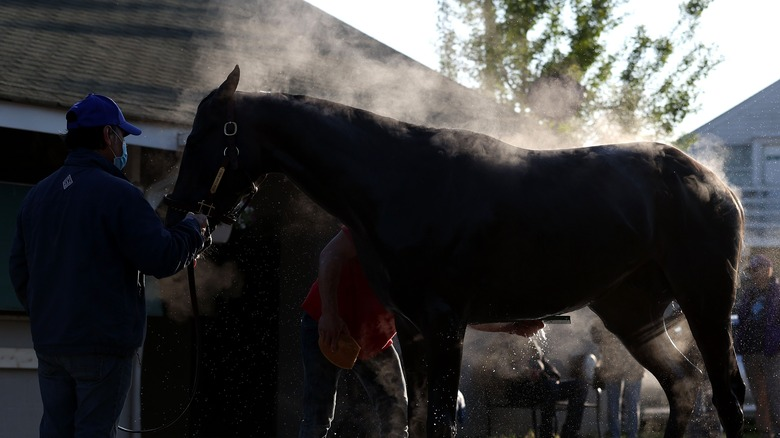 The horse Rock Your World being washed in advance of The Kentucky Derby