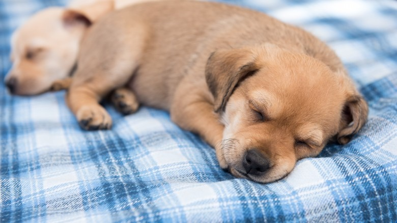 Excellent Reasons Your Pets Shouldnt Sleep In Your Bed Creativecarmelina Interior Chair Design Creativecarmelinacom