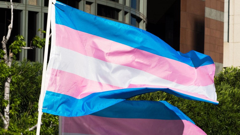 The Truth About The Trans Flag