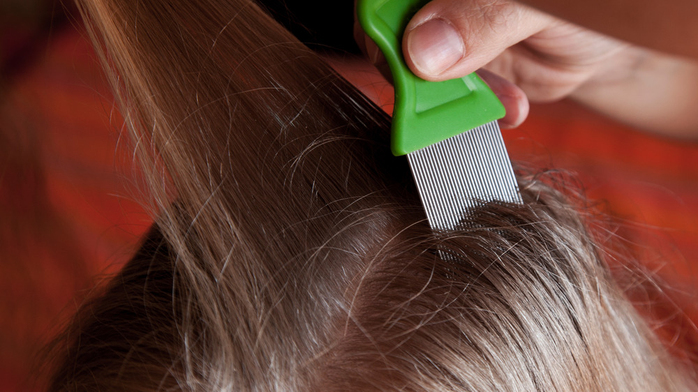head lice comb being used