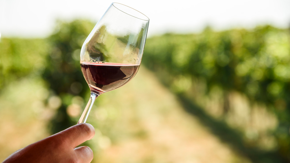 Person holding up half-full red wine glass in vineyard