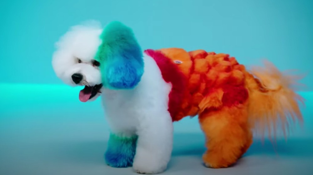 Rainbow colored dog panting