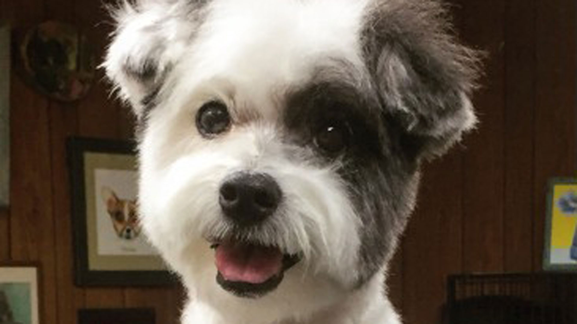 Adorable Dogs Before And After Haircuts