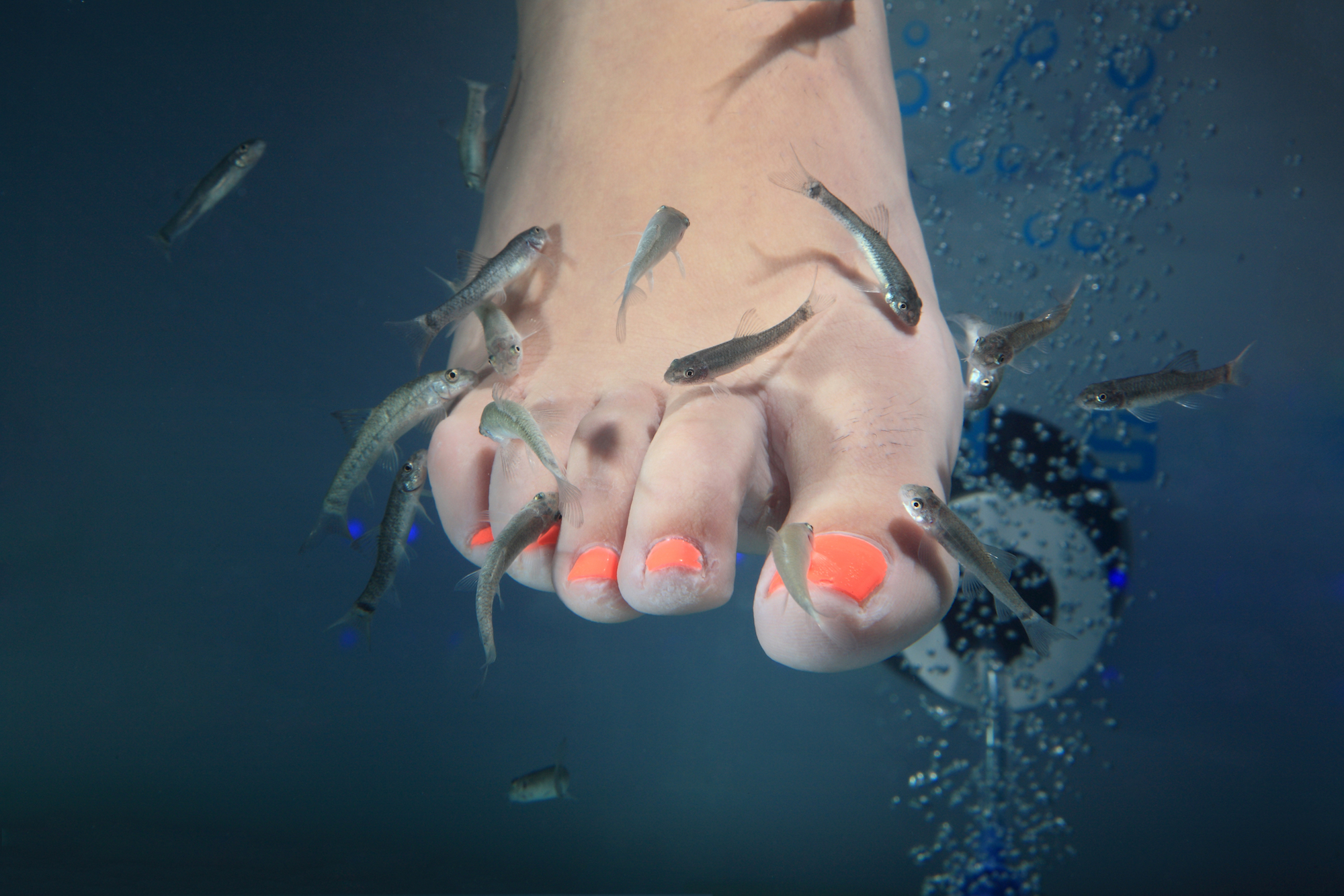 The untold truth of fish spa pedicures